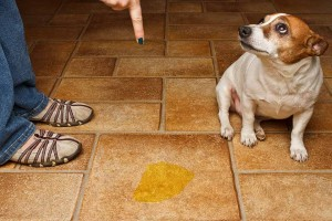 Get Rid of Dog Urine Smell